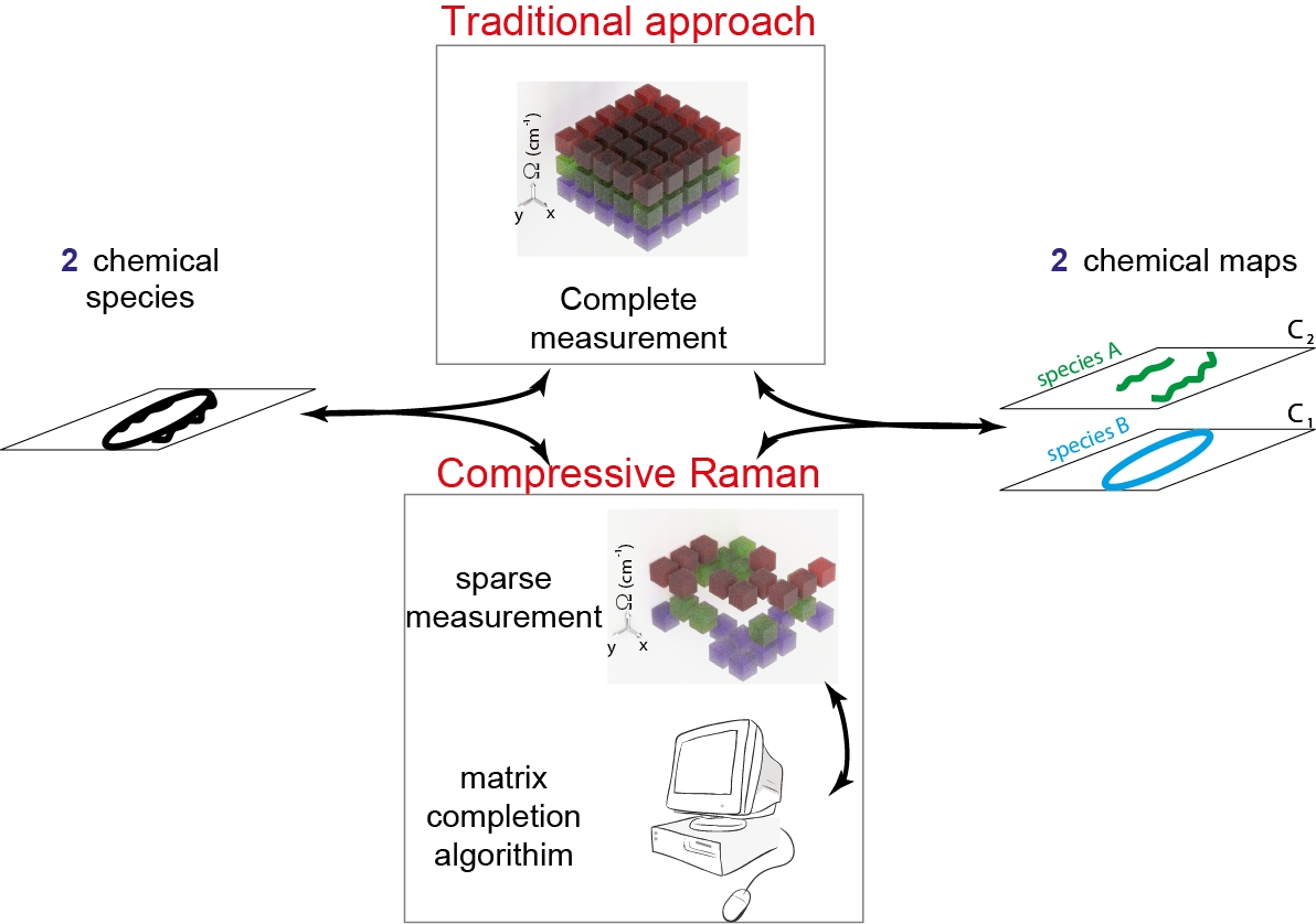 With the compressive Raman approach, the researchers acquires less spectral data than traditionally required and then use the matrix completion algorithm.