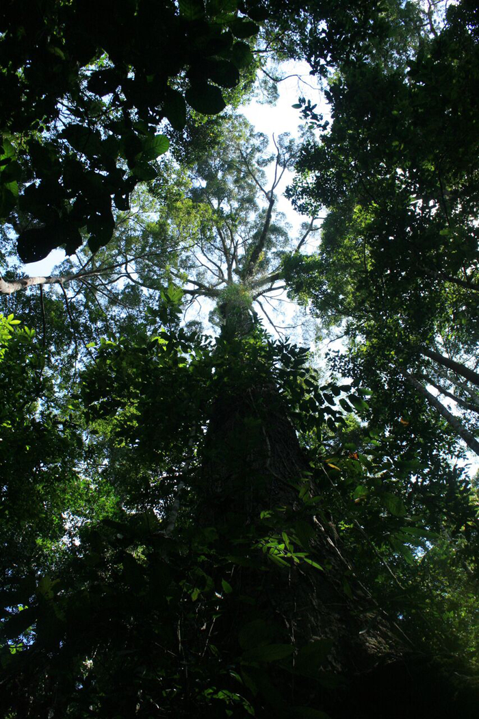 """Shadows and tall trees: in """"Sabah's Lost World"""" in the Maliau Basin Conservation Area."""