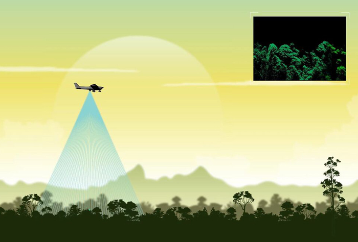 Tree-mendous; an airborne lidar spotted the giant Yellow Meranti.