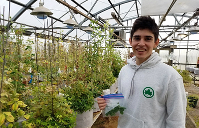 Research scientist Lee Sanchez with peanut plant samples.