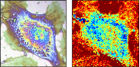 Standard microscopy (l) contrasted with new thermal imaging process (r).