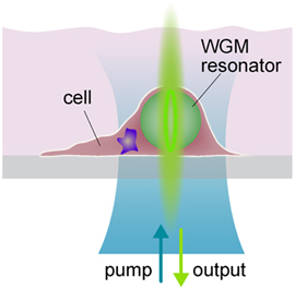 Schematic of a hmnan cell containing the micro laser.