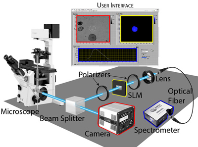 Spectroscopy of selected regions of a microscope sample.