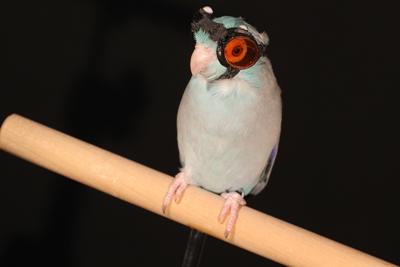 Custom safetly goggles