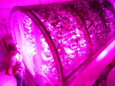 Lights for space food: Philips LEDs promote lettuce growth