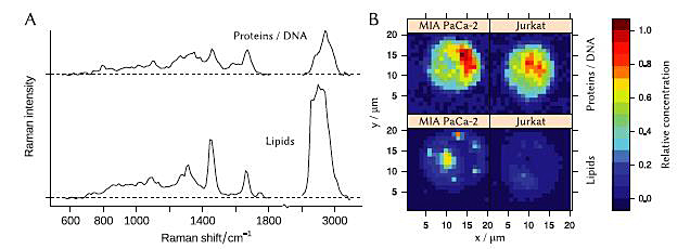 Spectroscopy using the economy system was performed on cells from two different cancer cell lines.