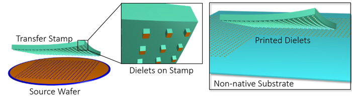 Schematic view of the micro-transfer print (µTP) process.
