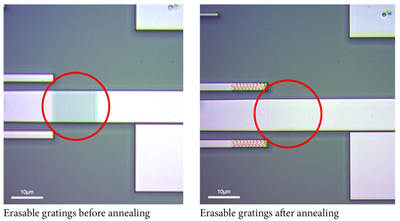 Now you see it... optical microscope images of erasable gratings.