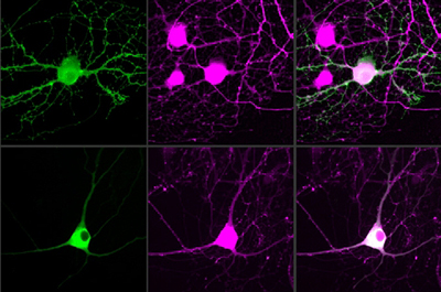 MIT researchers have devised a way to control single neurons using optogenetics.