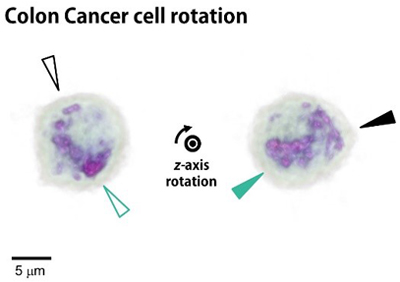 Research results: manipulation of cancer cells, blood cells and more.