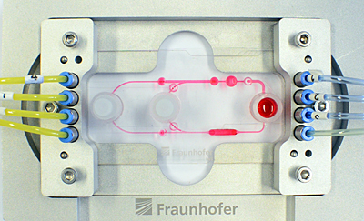 Laser-cut: multi-organ chip with pumps and valves (red dots) and organ chambers.