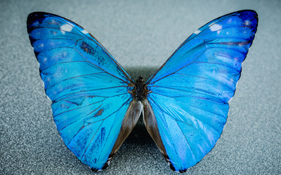 New camera is inspired by the eye of the morpho butterfly.