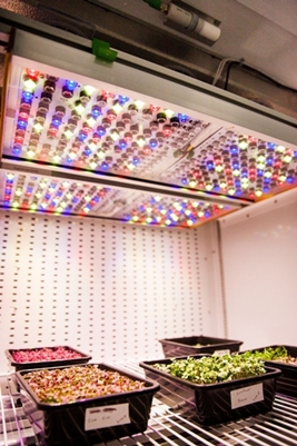 Phytofy RL: LED lighting for plant research