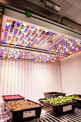 Phytofy RL: LED lighting for plant research